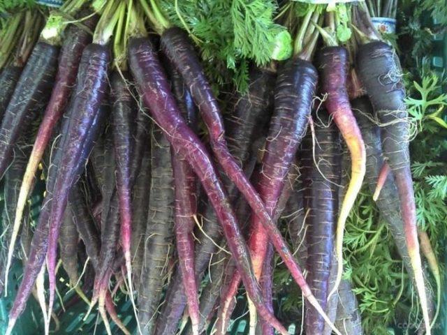 Морковь черная