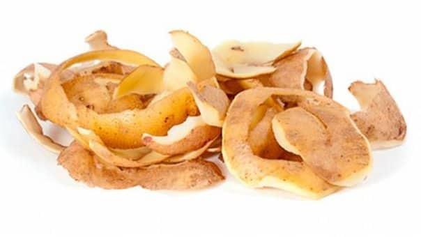 Подкормка смородины весной: картофельными очистками, минеральными удобрениями, народными средствами
