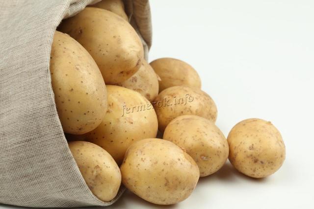 Картофель Родриго: характеристика сорта, фото, отзывы