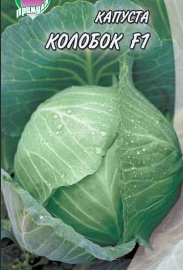Капуста «Колобок»: описание сорта, фото, отзывы