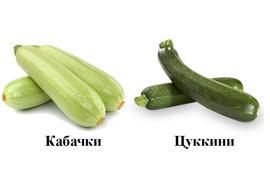 Чем отличается цукини от кабачка