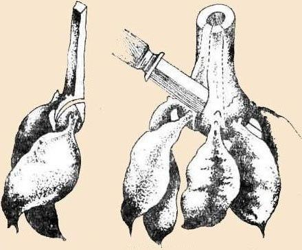 Как пасынковать георгины