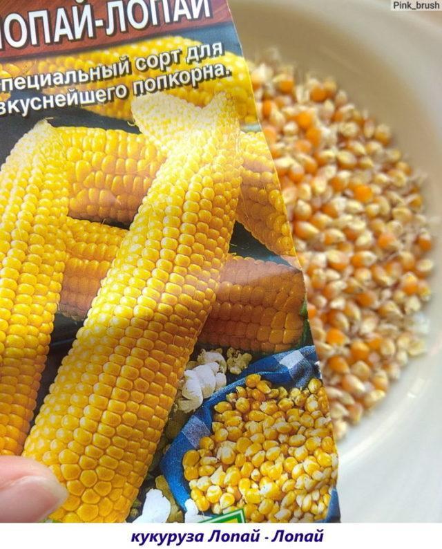 Кукуруза для попкорна: названия сортов, выращивание, фото