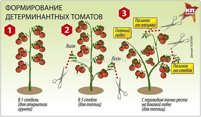 Томат Катя: характеристика и описание сорта