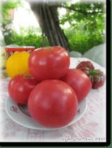 Томат Очарование: характеристика и описание сорта, фото, отзывы