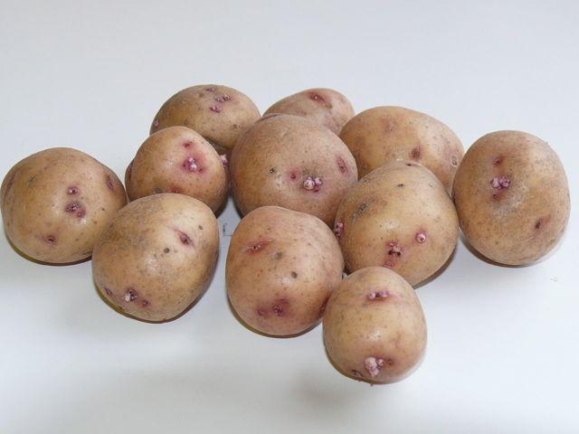 Картофель Аврора: описание сорта, фото, отзывы.
