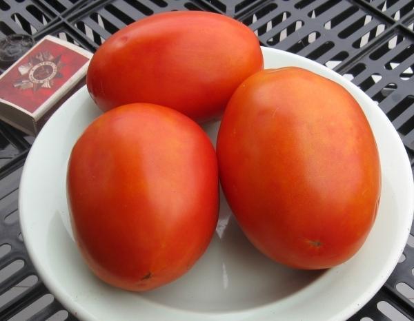 Томат Гусиное яйцо: характеристика и описание сорта