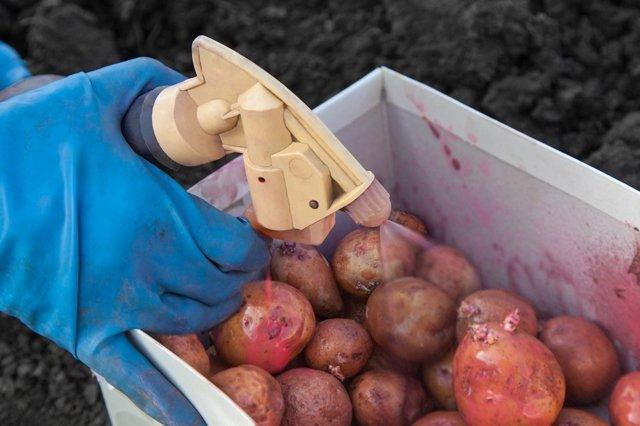 Посадка картофеля в мае 2019 года