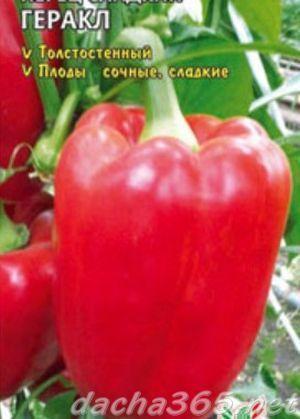 Перец Геракл: описание сорта, урожайность, уход, фото, отзывы