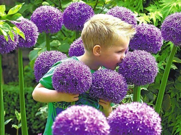 Высокорослые садовые многолетники