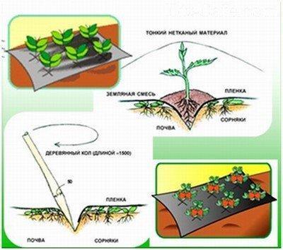 Укрытие для клубники от сорняков