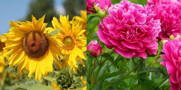 Кислая почва - как определить по сорнякам + фото