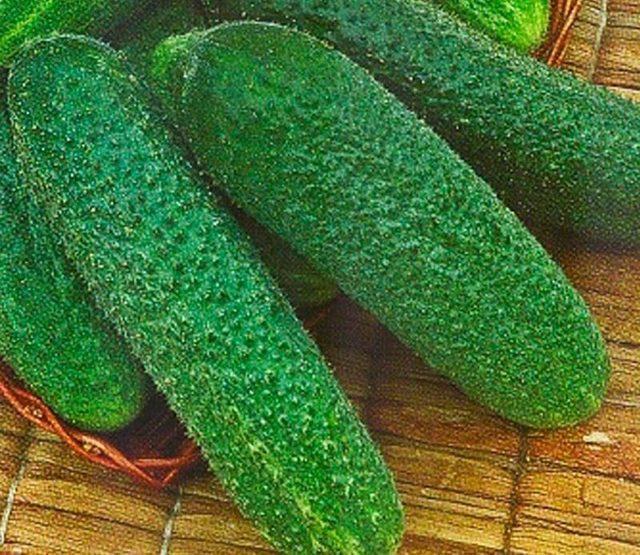 Огурец Трилоджи f1: описание, отзывы о сорте, выращивание, фото