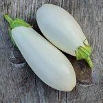 Баклажан Снежный: характеристика и описание сорта, выращивание, отзывы, фото
