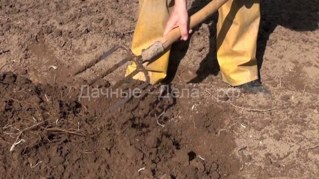 Редька масличная как удобрение и кормовая культура: когда сажать, технология возделывания