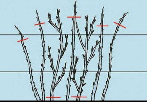 Подготовка малины к зиме осенью: как обработать, уход