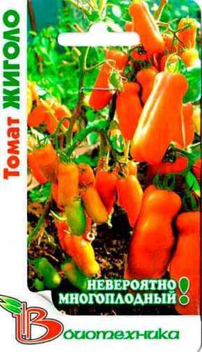 Томат Жигало: отзывы, фото, кто сажал