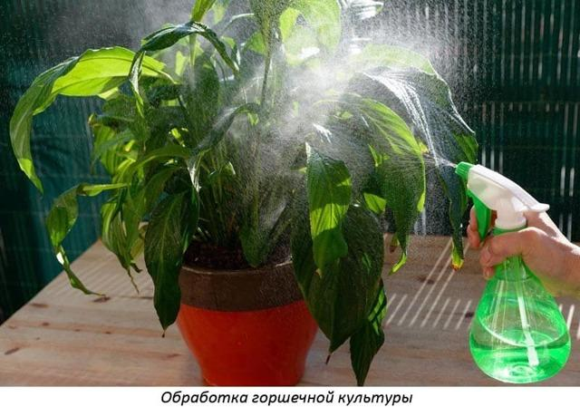 Атлет для рассады: огурцов, томатов, цветов, инструкция, отзывы.