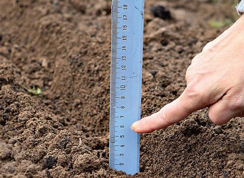 Лук-чернушка под зиму: когда сажать, можно ли сеять осенью