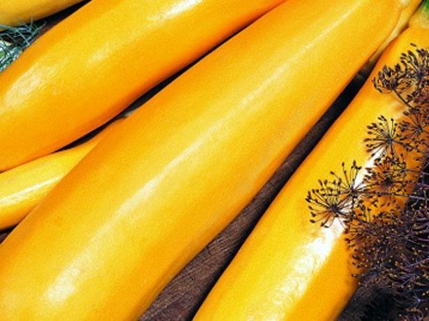 Кабачок Золотинка: описание сорта, фото, отзывы