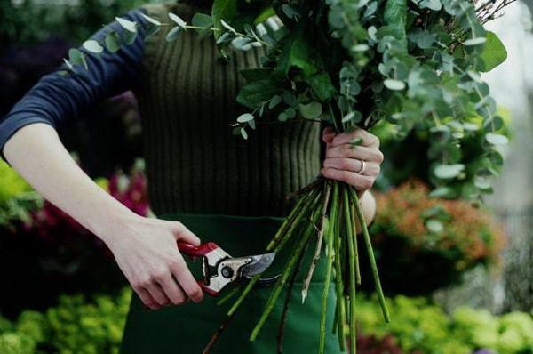 Черенкование роз осенью: заготовка, укоренение и посадка черенков, видео