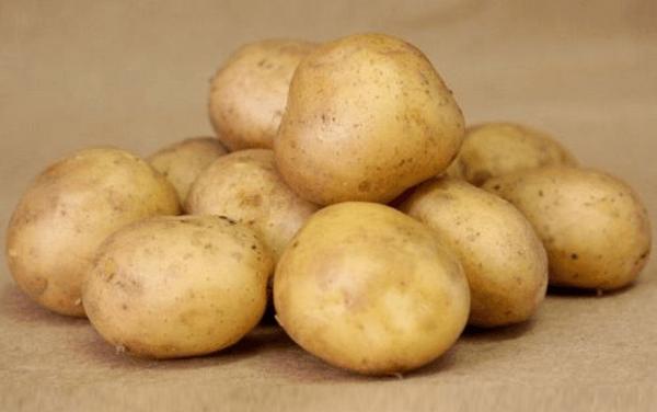 Картофель Колобок: описание сорта, отзывы, фото
