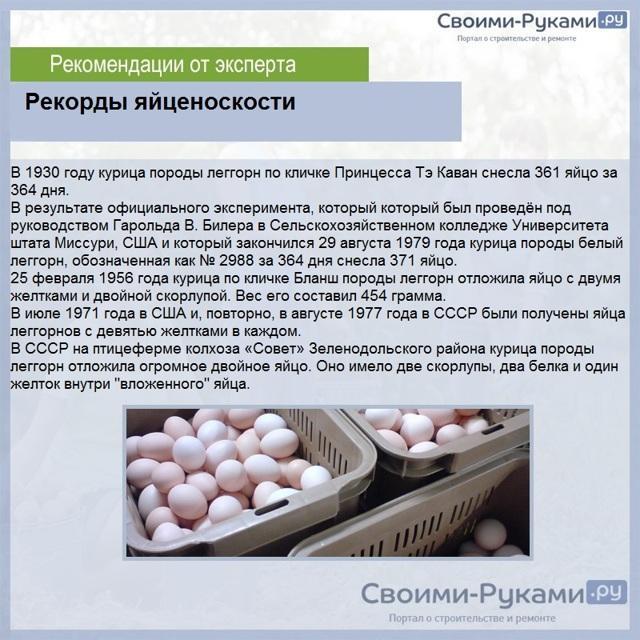 Куры-несушки: лучшие породы, фото и описание