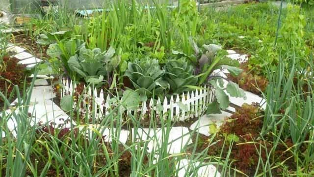 Чем огородить грядки на даче