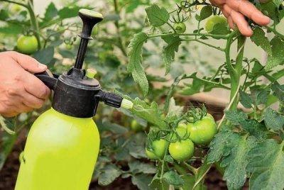 Лучшие комплексные удобрения для томатов