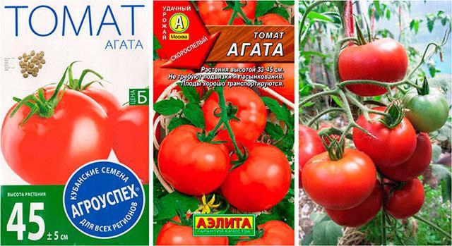 Томат Агата: характеристика и описание сорта