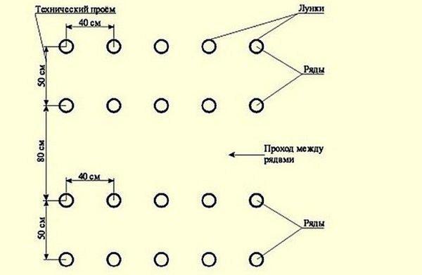 Томат Японский краб: характеристика и описание сорта