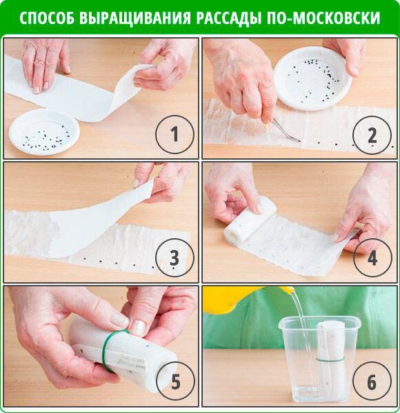 Рассаду перца выращиваем на туалетной бумаге