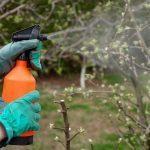 Как правильно сеять морковь весной