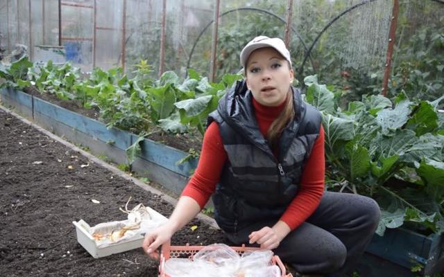 Посадка лука под зиму в Подмосковье: видео, сроки, сорта