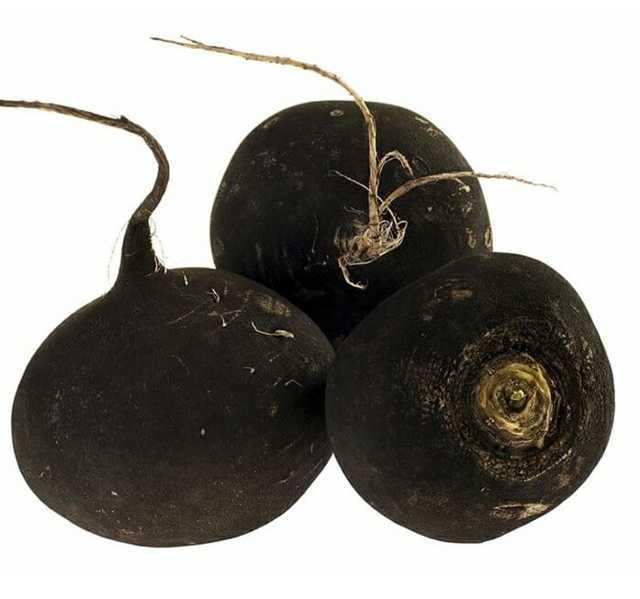 Черная редька: польза и вред, состав, калорийность, применение, противопоказания