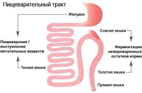 Клюква при панкреатите