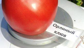Томат Орлиный клюв: характеристика и описание сорта