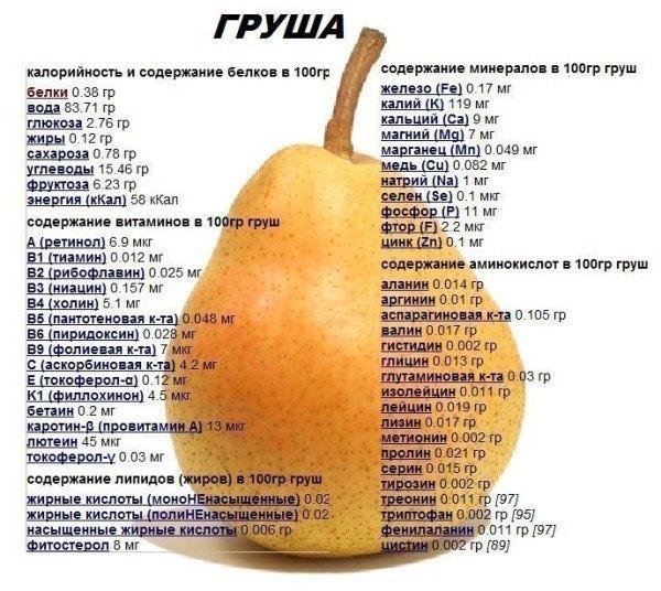 Груша: польза и вред для организма женщины, мужчины, какие витамины содержит