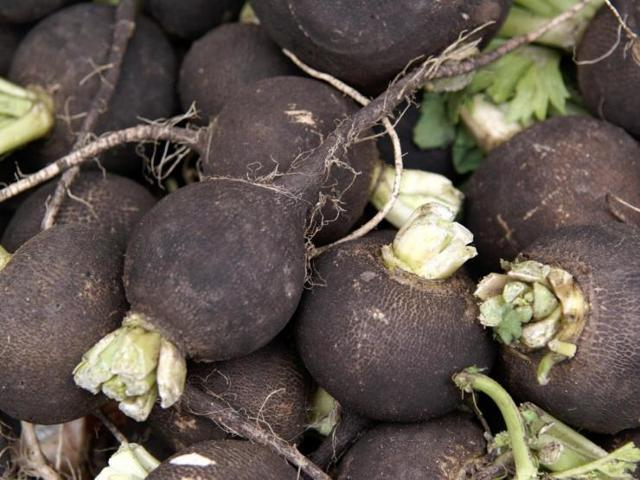 Редька: когда сажать в открытый грунт семенами, выращивание и уход