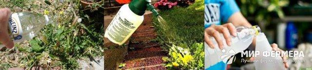 Моющее средство от сорняков: уксус + соль
