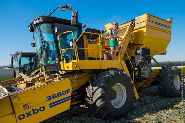 Сорт кукурузы Бондюэль: технология выращивания в открытом грунте, ГМО или нет