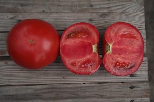 Томат Кибо f1: описание сорта, фото, отзывы, урожайность