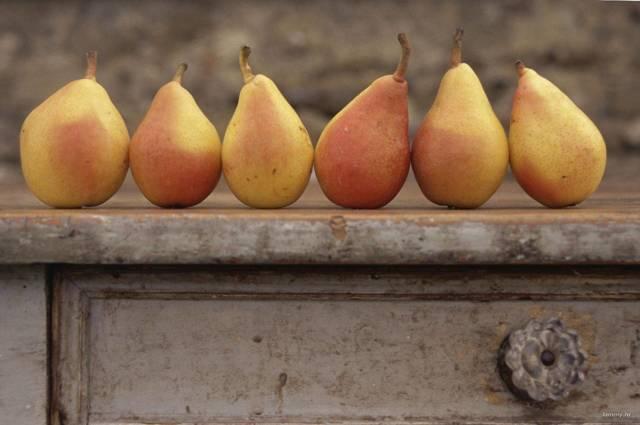 Вяленые груши: польза и вред, калорийность, как вялить, как приготовить в духовке, в электросушилке