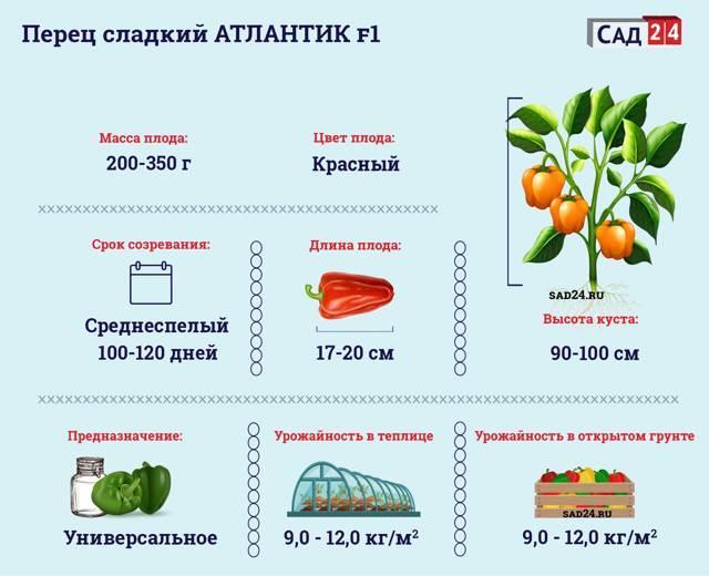 Перец Атлантик f1: описание сорта, урожайность, фото, отзывы