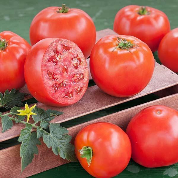 Как собрать семена помидоров в домашних условиях: правила заготовки семян томатов, видео