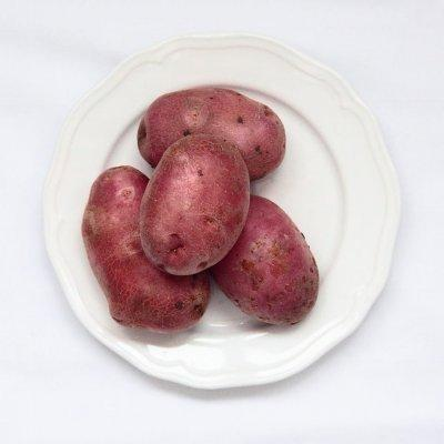 Картошка манифест характеристика