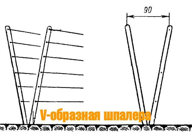 Шпалера для ежевики: как сделать своими руками и подвязать, видео