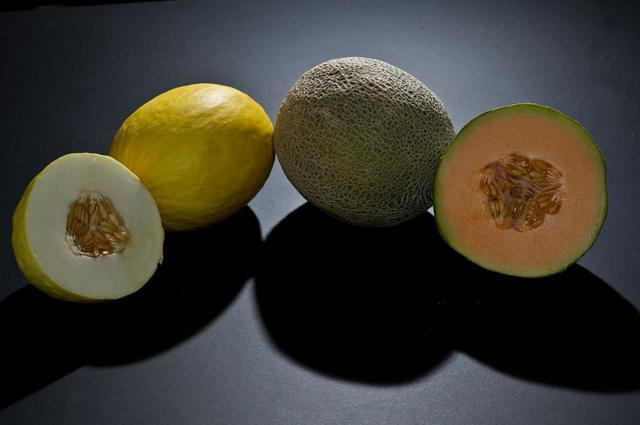 Дыня канталупа (мускатная, мускусная): что это такое, как выглядит, калорийность, правила выращивания