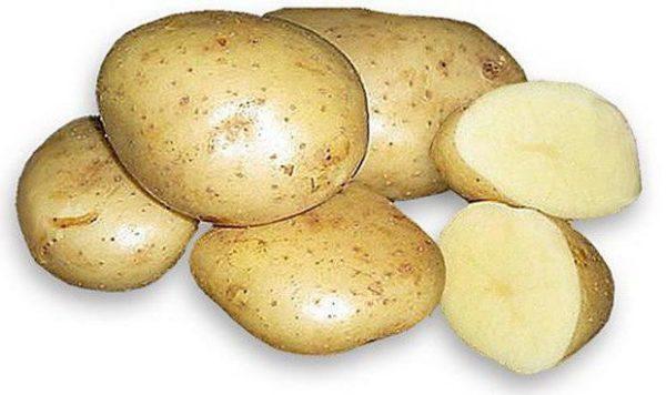 Картофель Каратоп: описание сорта, фото, отзывы, урожайность, выращивание