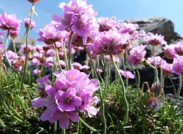 Цветы многолетники цветущие все лето